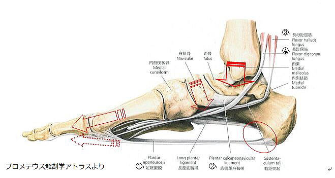 足底腱膜炎の痛みを改善