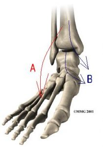 foot_anatomy_bones01_text